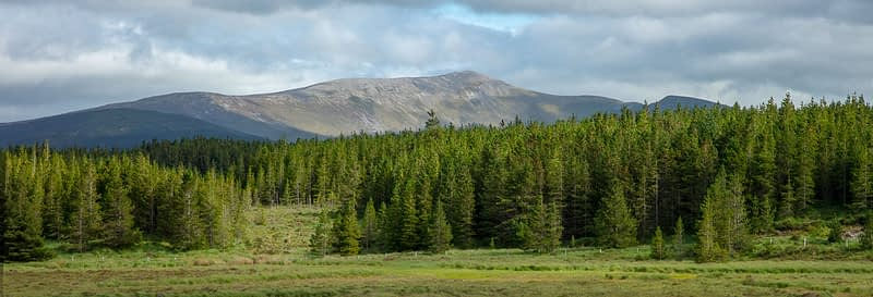 Conifer forest beneath Birreencorragh mountain. Wild Nephin Wilderness Area, Ballycroy National Park, County Mayo, Ireland.