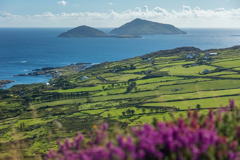 Scarriff and Deenish Islands beyond green fields and heather. Caherdaniel, County Kerry, Ireland.