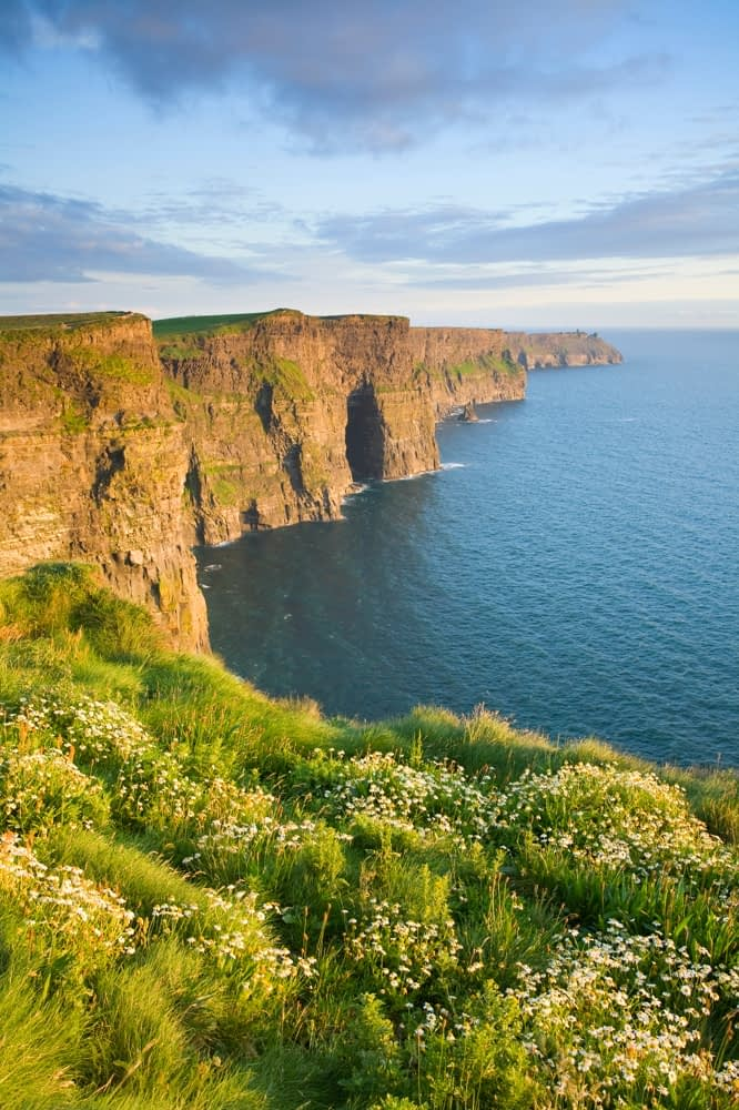 Summer daisies at the Cliffs of Moher, Co Clare, Ireland.